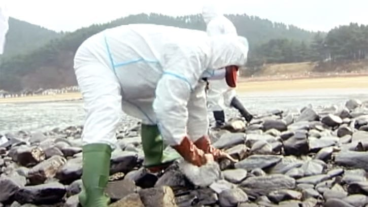 Ilchi Lee helping to clean up an oil spill in South Korea