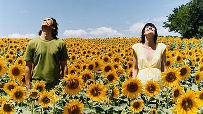 young man and woman in a field of sunflowers