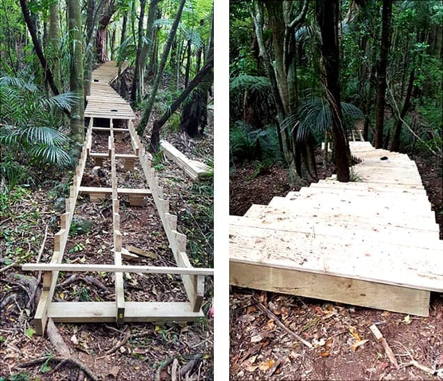 wooden trail through a New Zealand forest