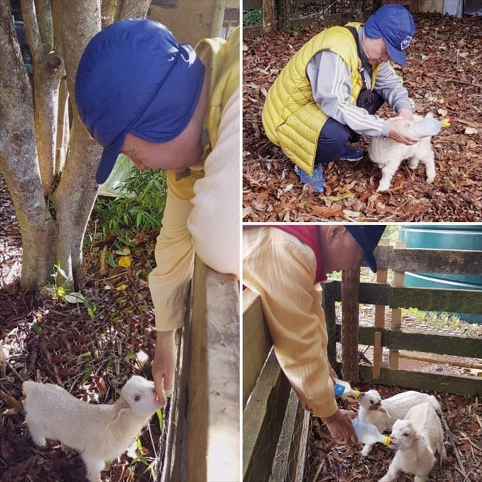Ilchi Lee feeding baby goats milk